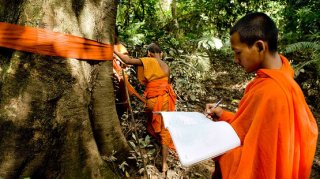 Monks mark trees in the Areng Valley for their protection. They are highly respected in Cambodia and want to transfer this respect to the tree giants.